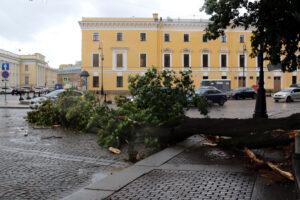 Комитет по благоустройству: в Петербурге шторм повредил или уничтожил 458 деревьев