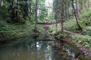 Специалисты проверили состояние воды в Буферном пруду