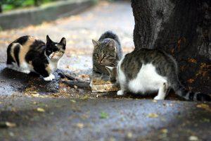 В Ленобласти начинается осенняя кампания по вакцинации животных от бешенства