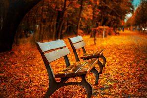 Синоптик: В Петербурге продолжается тёплая осень