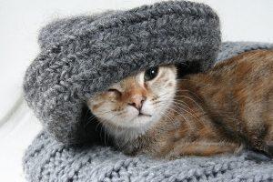 В Ленобласти ночью температура опускалась до -4 градусов