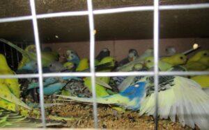 Не 38 попугаев: большую партию экзотических птиц пропустили в аэропорту Петербурга