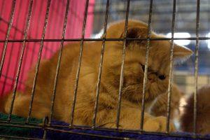 В Петербурге планируют создать два государственных приюта для бездомных животных