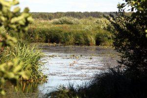 В Ленобласти запустили аудиогид по особо охраняемым природным территориям