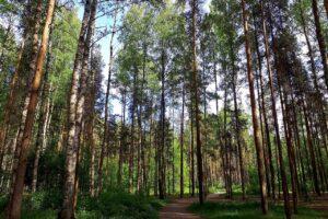 В Петербурге высадят около 11 тысяч новых деревьев