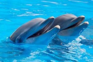 В России могут запретить отлов морских животных для дельфинариев