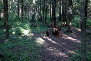 47 за 3: Ленобласть прокладывает заповедные тропы