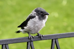 В заповедниках Ленобласти стартовала установка домиков для птиц