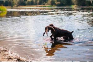 В Ленобласти установлены новые сроки весенней охоты на перелётную водоплавающую дичь