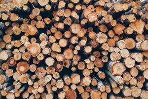 Руководителей лесозаготовительного предприятия изобличили в незаконной вырубке в Киришском районе